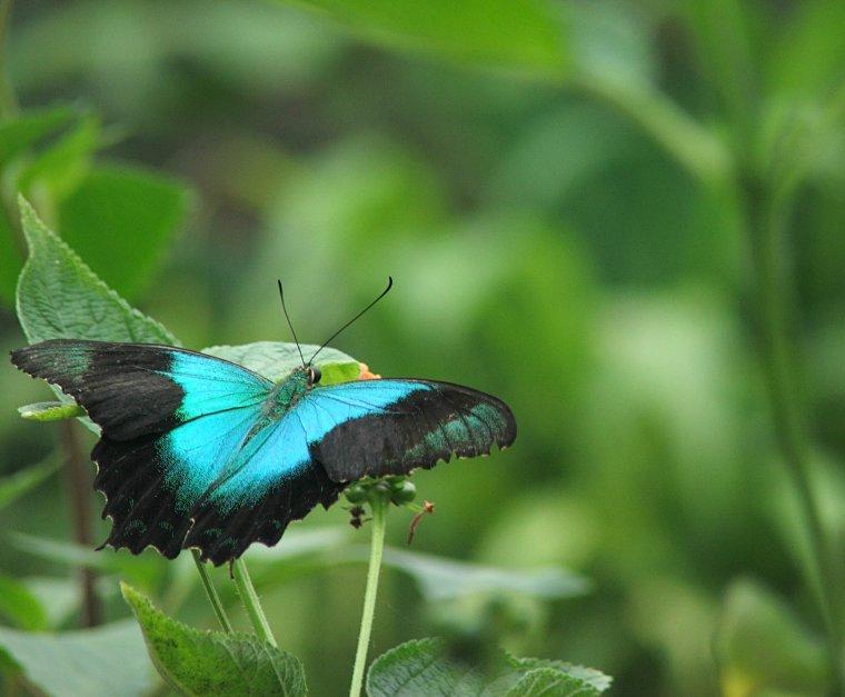 Farma motyli w Stratford-upon-Avon